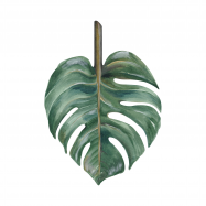 Leaf Philodendron